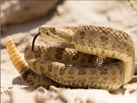 صورة اكتشاف فيروسات تسبب مرضا للثعابين