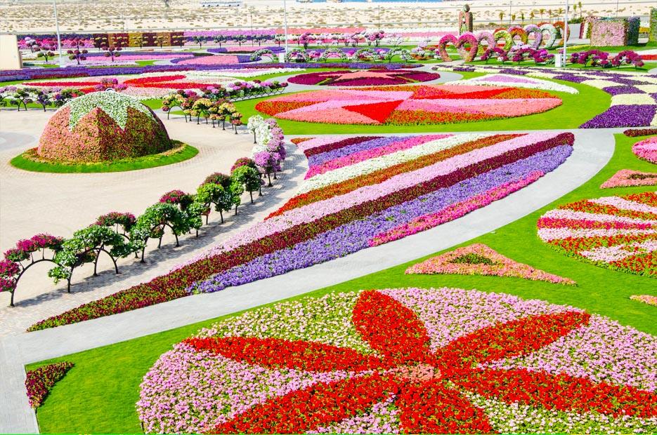 """صورة 45 مليون زهرة تجعل """"دبي ميراكل جاردن"""" أكبر حديقة زهور في العالم"""