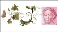 صورة جوجل يحتفل بالذكرى 366 لرسامة الحشرات ماريا سبيلا