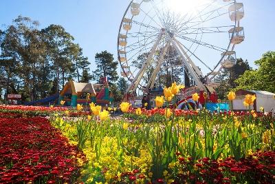 صورة مليون زهرة في المهرجان السابع والعشرين للزهور في كانبيرا
