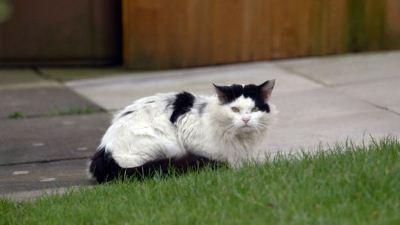 Photo of أستراليا تدافع عن خطط إعدام القطط الوحشية