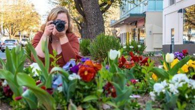 صورة بسبب جائحة كورونا الغاء الاحتفال بمهرجان الزهور السنوي في كانبرا